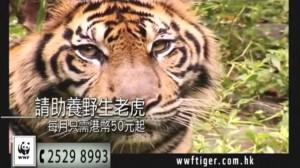 WWF2-300x168